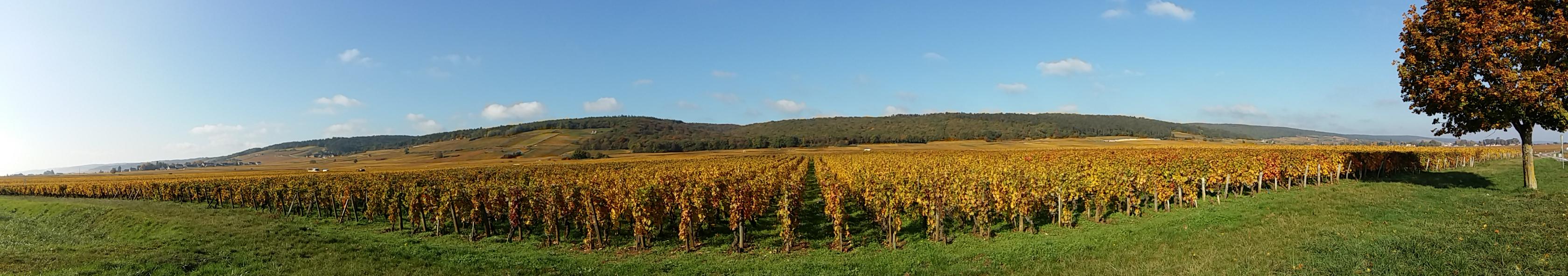 Sur la route des vins, Morey Saint Denis
